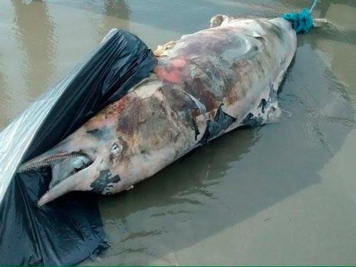 Golfinho no lixo